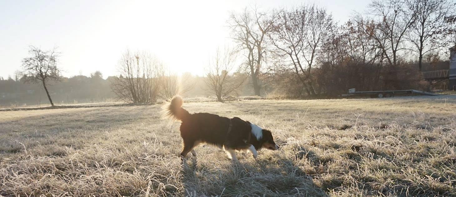 hundeblog_Hundenamen_australianshepherd