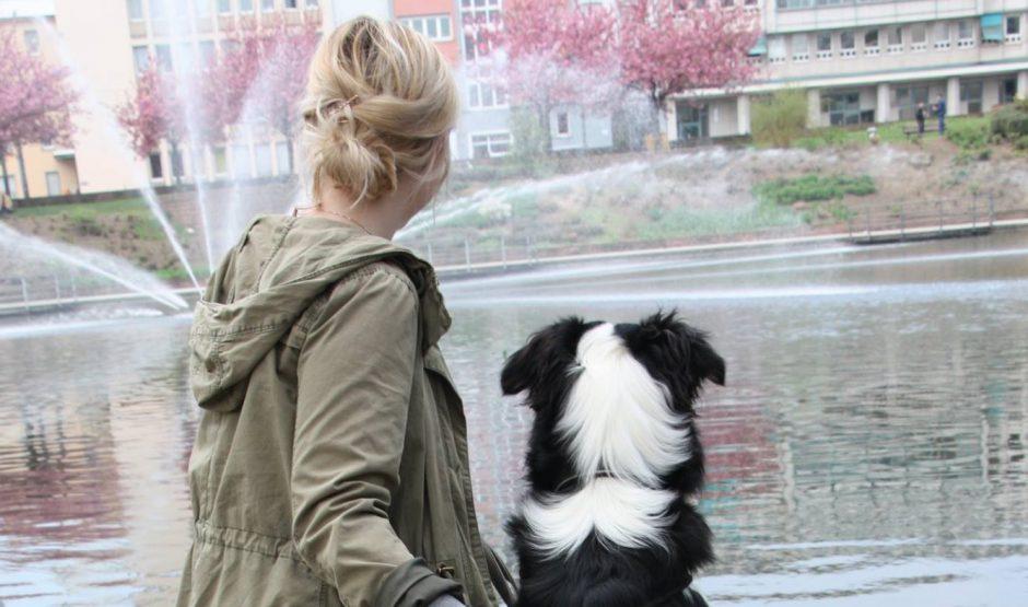 hundeblog_australian_shepherd