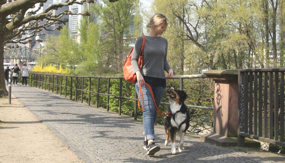 hundeblog_zeckenschutz