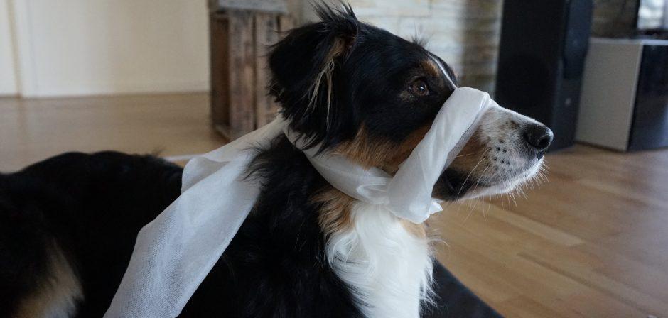 Hundeblog_erste_hilfe