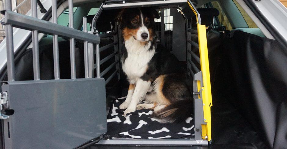 hundeblog_Hundebox_Test_dogsoulmate