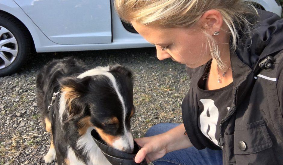 Hundeblog_dogsoulmate_erstehilfehund