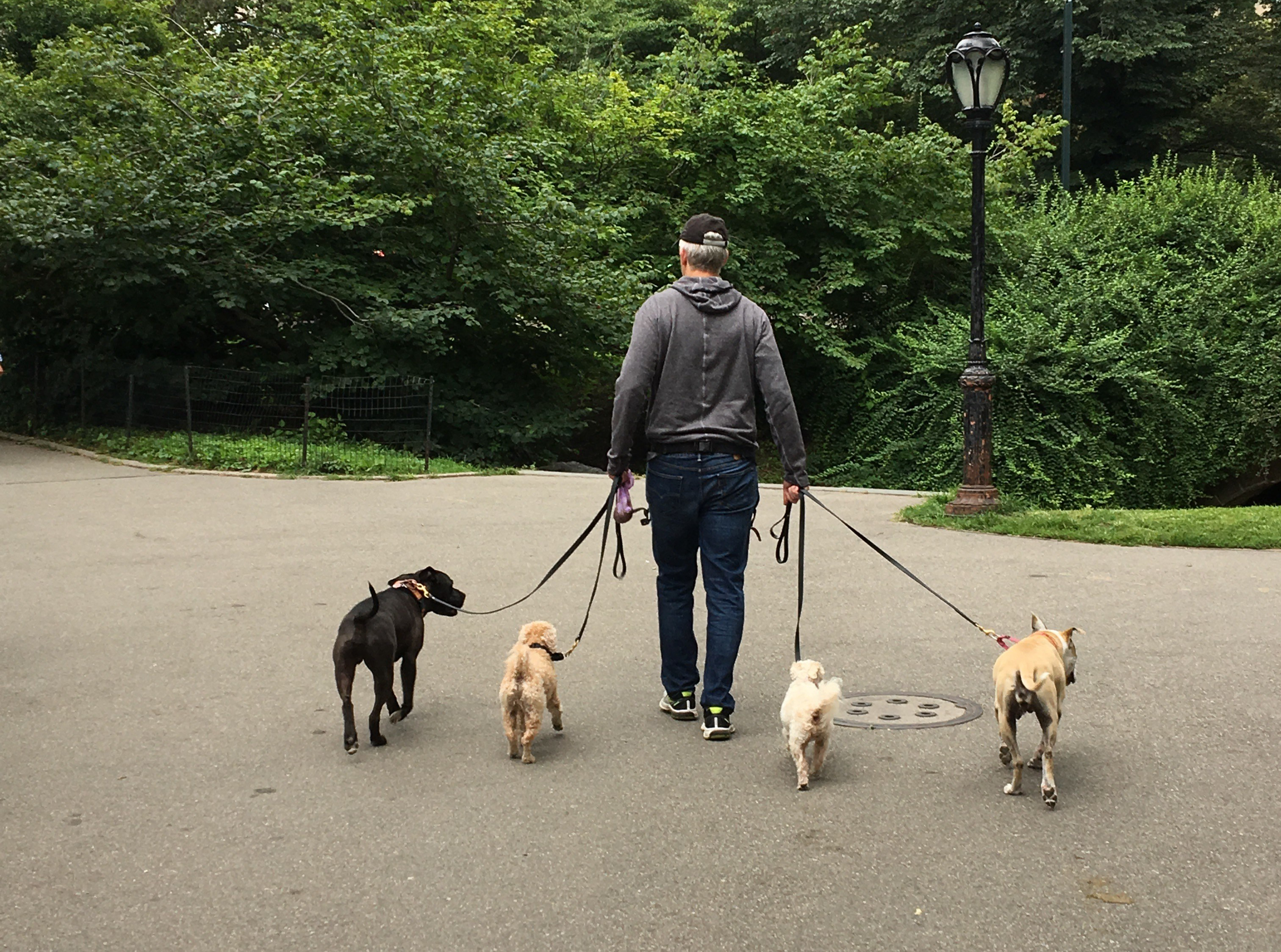 hundeblog_dogsoulmate_Reisen_ohne_hund