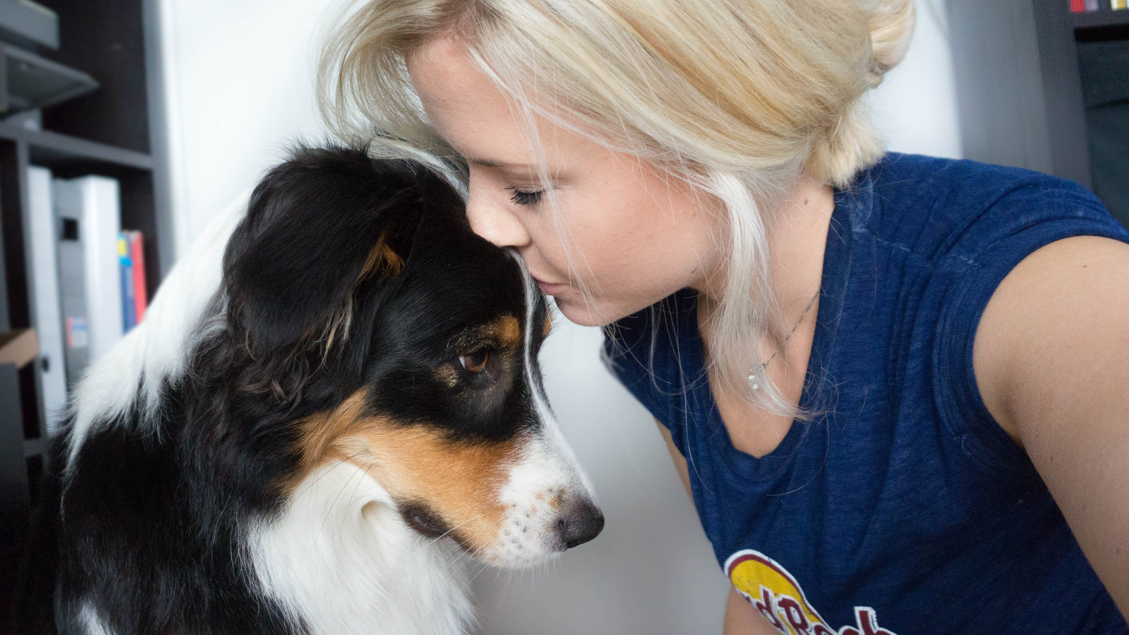 hundeblog_australian_shepherd_dogsoulmate_2