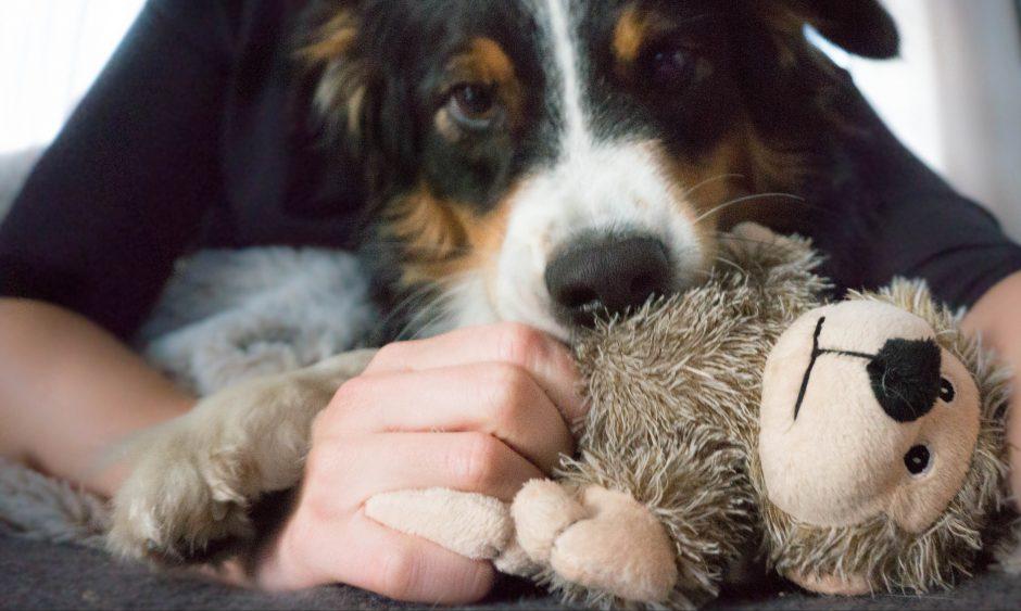 DogSoulmate_hundeblog