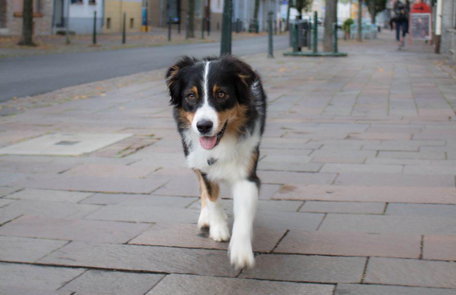 Hundeblog_dogsoulmate_Haustierversicherungen