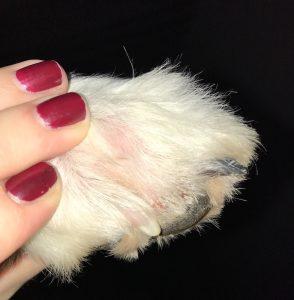 hundeblog_dogsoulmate_Pfotenverletzung