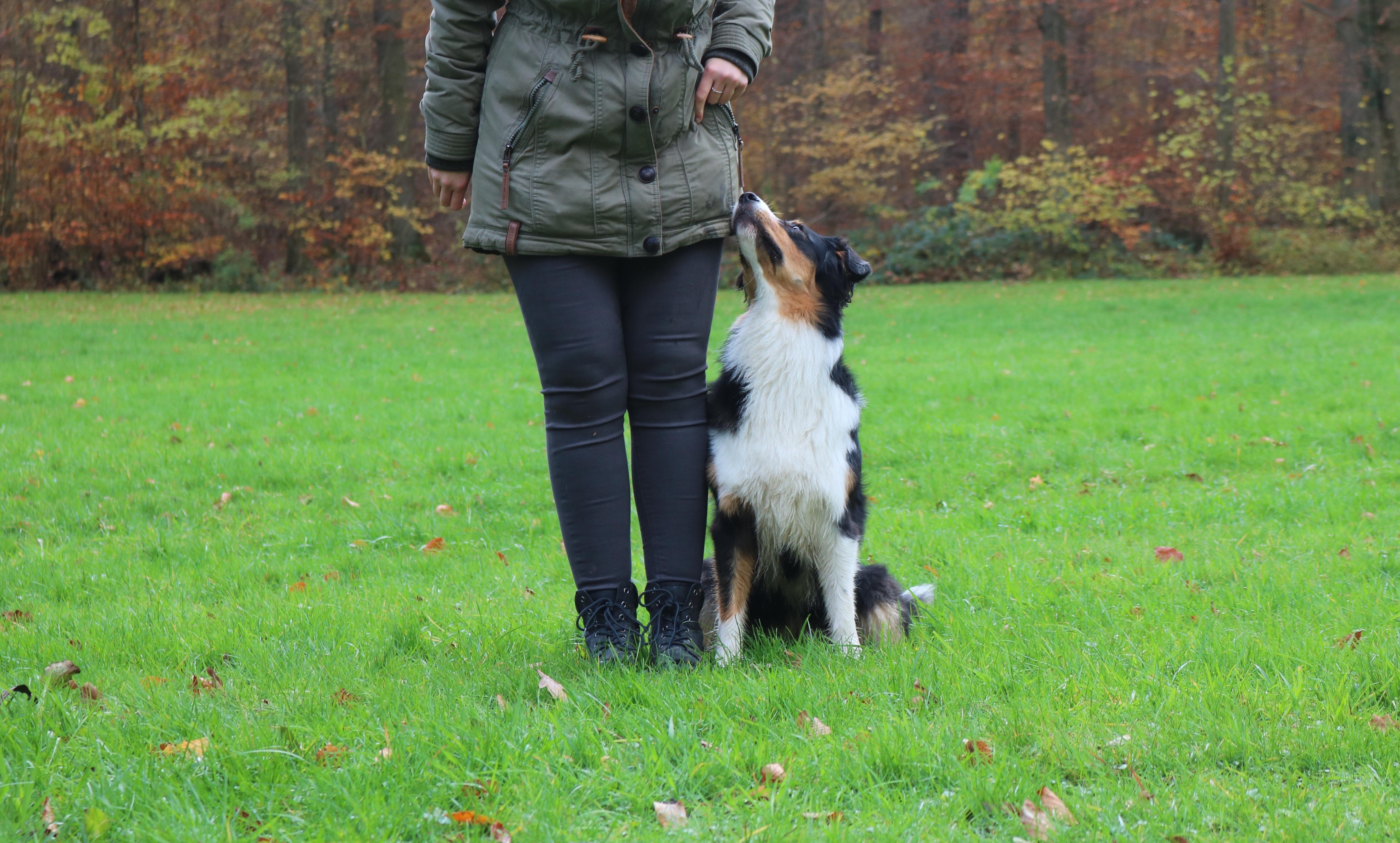 hundeblog_dogsoulmate_Begleithundprüfung