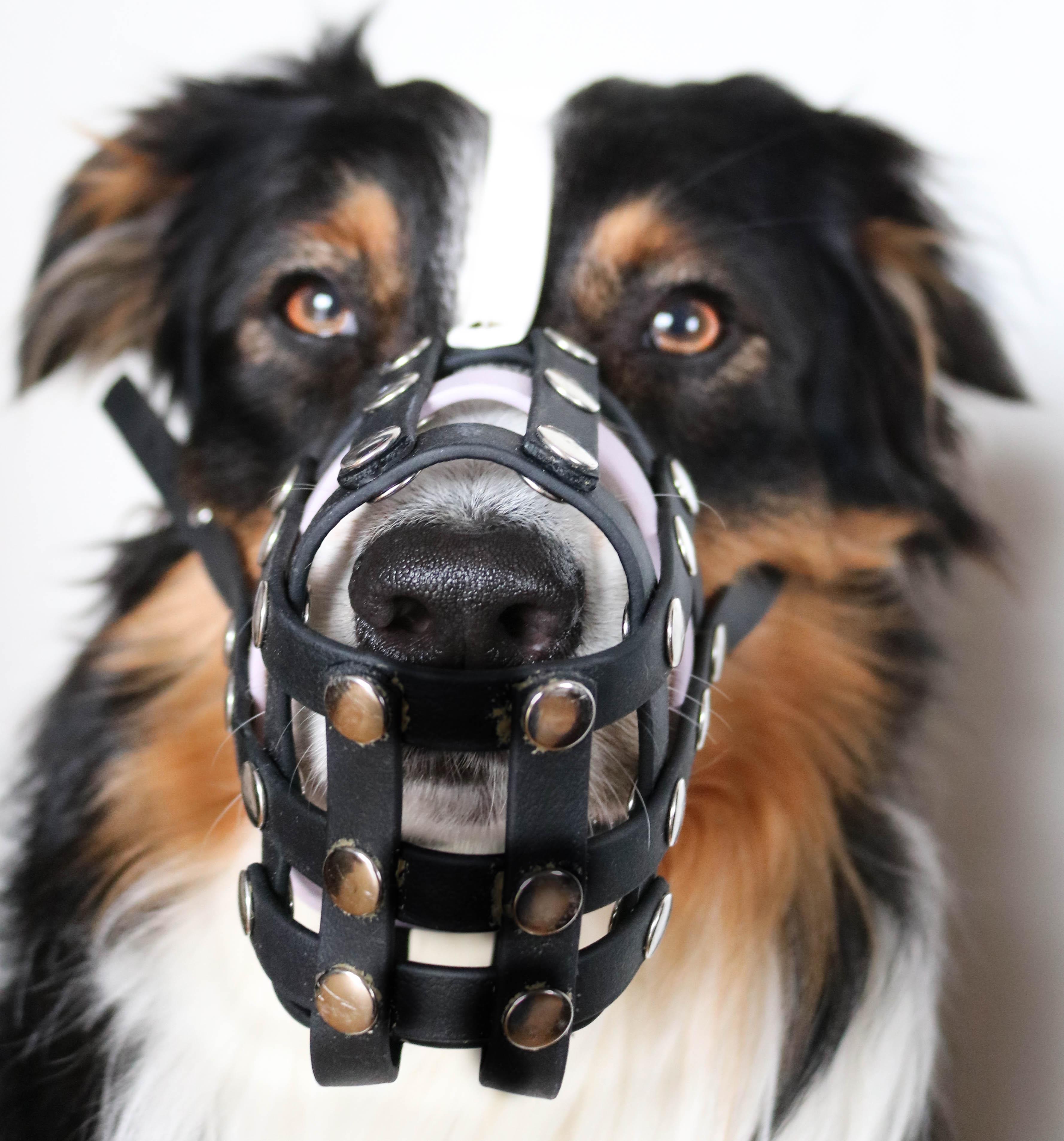 Hundeblog_dogsoulmate20181-70