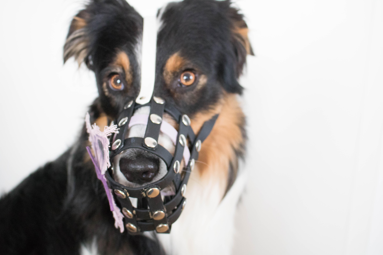 Hundeblog_dogsoulmate20181-73