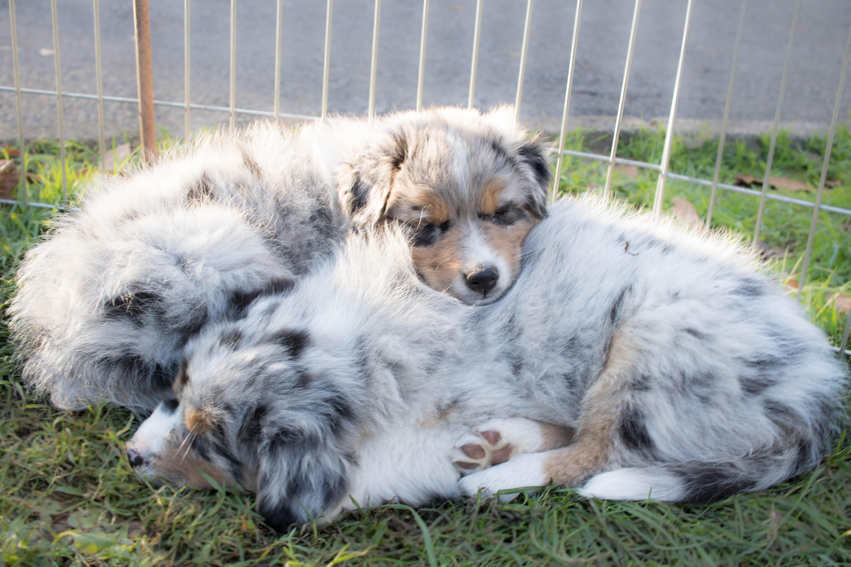 Hundeblog_dogsoulmate20181-243